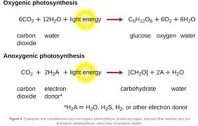 how the equation for photosynthesis and aerobic respiration compare