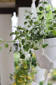 Hanging Planters Hanging Planters Are Easy To Make A Beautiful Mess