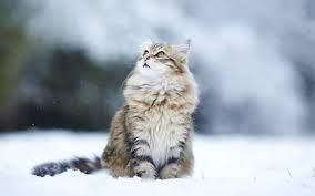 Winter Kitten Wallpaper on WallpaperSafari
