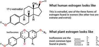Estrogen Foods List 50 High Natural Phytoestrogen Sources