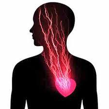Resultado de imagen para los tres cerebros corazon, intestinal y craneal