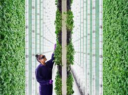 the farm of the future might be in