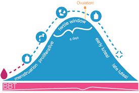 What Is The Fertile Window