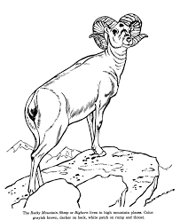 Small Picture Animal Drawings Coloring Pages Bighorn Sheep animal