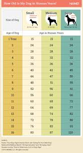 dog age chart how to convert your dog