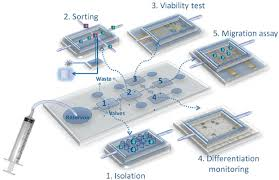 Lab On A Chip Example Of A Modular Lab On A Chip For Stem Cell Studies Several