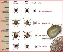 Cdc Tick Identification Chart Pin By Redbuds Farm On Garden Pests Ipm Ecological Balance