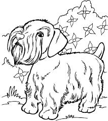 Uniek Kleurplaten Van Honden En Paarden Klupaatswebsite