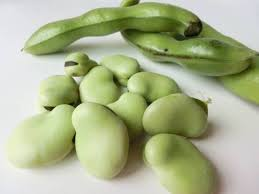 broad bean fava bean crops nutrients 1st picture image