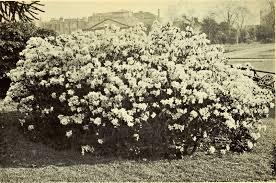 file the book of the winter garden 1906 20213337419 jpg