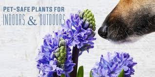 Pet-safe plants feature