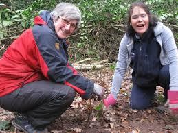 Category: Hazel - Holt Copse Conservation Volunteers