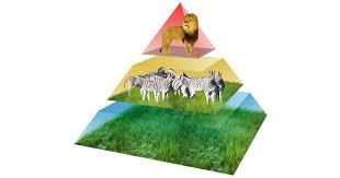 animal food pyramid. Brilliant Food To Animal Food Pyramid G