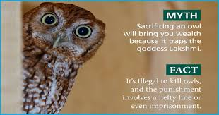 To Bring 'Prosperity & Wealth', Thousands Of <b>Owls</b> Are Illegally ...