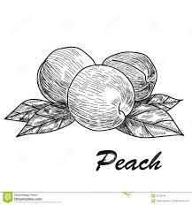 Fresh Peach Abh Wiring Diagram Database
