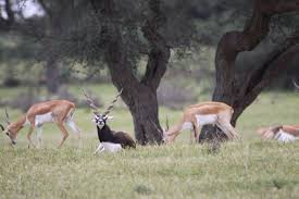 the land of the bishnois where conservation of wildlife is a the land of the bishnois where conservation of wildlife is a religion the better