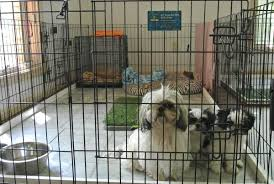 before bringing home a new puppy prepare a place for your new puppy