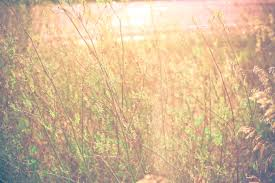 nature backgrounds tumblr. beautiful nature backgrounds tumblr - google search