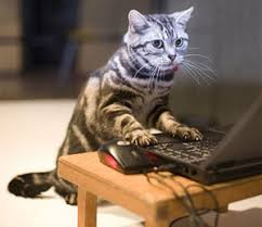 Image result for typing cat