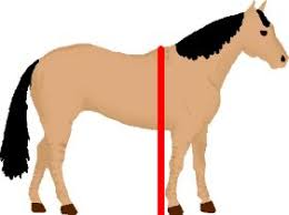 Horse Height Hands Conversion Chart