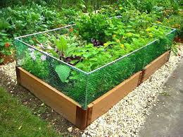 garden barrier. Modren Barrier Raised Garden Bed With Fence Barrier Inside T