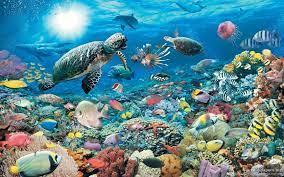 Underwater Wallpaper Hd