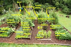 Small Picture Potager Garden Layout Plans Awesome Find This Pin And More On