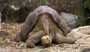 Resultado de imagen para especies animales extinguidos