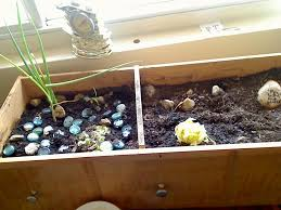 apartment vegetable garden. Exellent Garden Apartment Vegetable Garden  A Garden In An Old Dresser Drawer For