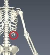 右 肋骨 下 痛み ズキズキ