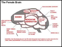 funny differences between male and female brains