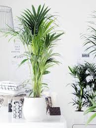 Blumen Und Pflanzen Im Schlafzimmer Schädlich Oder Gut Für Den