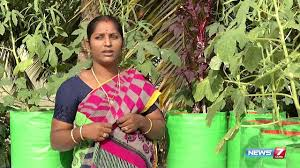 how to prepare homemade pesticide for organic vegetables for your garden poovali news7 tamil