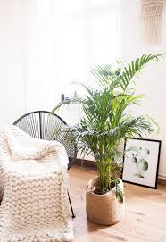 5 Pflegeleichte Zimmerpflanzen Für Euer Zuhause