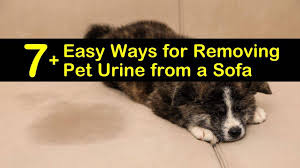 easy ways for removing pet urine from a