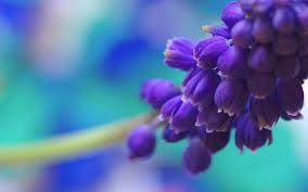 Purple Flowers Backgrounds Purple Flowers Wallpaper 2560x1600 38158