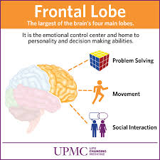 upmc frontallobe s draft other important functions of the frontal lobe