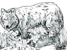 Wolf Coloring Sheets Wolf Coloring Sheets Wolf Coloring Pages Free