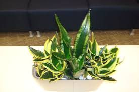plants for windowless office. saving the planet from global warming by turning off lights in offices (especially windowless) stop yourself \u0026 help plants that give us life. for windowless office o