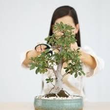 Kết quả hình ảnh cho cay canh nghe thuat bonsai