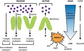 biological membranes essays in biochemistry  figure
