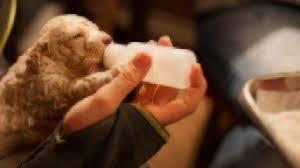 Bottle Feeding Puppy Chart Newborn Puppy Diet Puppy Formula Healthy Paws