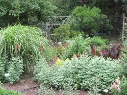 erfly garden at natural gardener in austin cannas