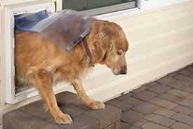 diy dog doors. Install A Pet Door Diy Dog Doors