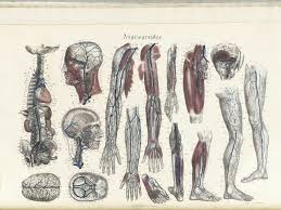 historical anatomies on the web  jean baptiste sarlandiere homeplate     of jean baptiste sarlandière    s anatomie méthodique  ou organographie humaine en