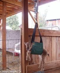 Saltmarsh Ranch Soay Sheep - Publications | Facebook
