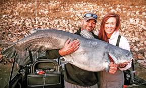 Blue Catfish Length Weight Chart 10 Places Worth Trying For Trophy Blue Cats