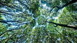 reasons why forests are important mother nature network forest canopy