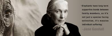 Jane Goodall Quotes Cool Savingthewild Legend Jane Goodall Inspires New Zealanders To