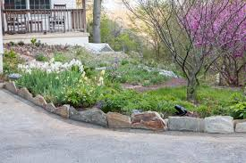 driveway turnaround beds are planted with species hellebores in full sun soil mix is the same as in all the raised beds 50 50 concrete sand and screened
